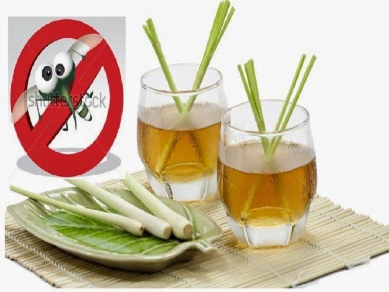 Bahan Alami Mengusir Nyamuk Tips Dokter Cantik
