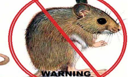 Tips Mengusir Tikus Di Rumah