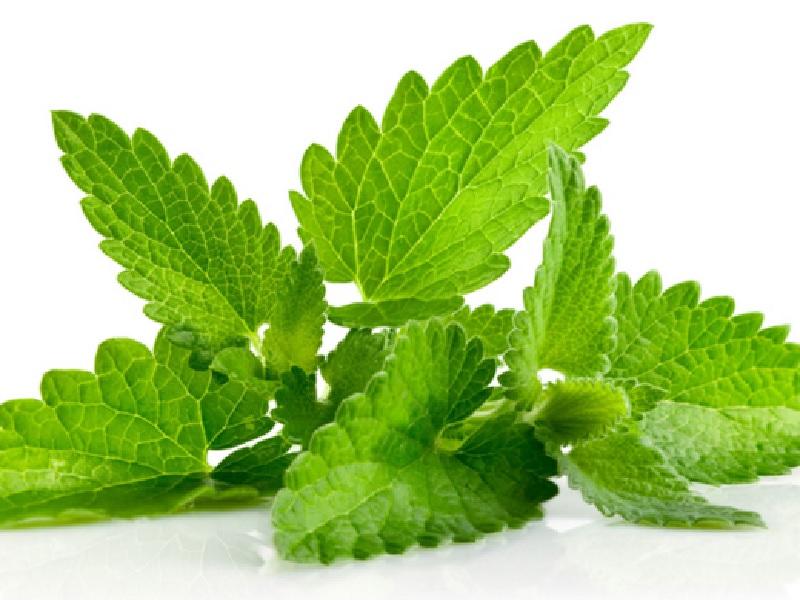 Manfaat Peppermint Untuk Kesehatan