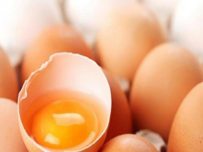Manfaat Telur Untuk Kesehatan Tulang