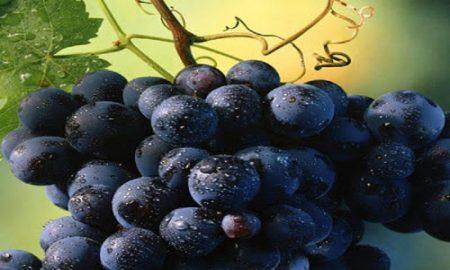 Anggur Hitam Dan Banyak Manfaatnya