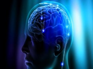 Apakah Benar Otak Lebih Besar Artinya Lebih Pintar?