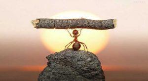 kerja keras dalam pencapaian kesuksesan