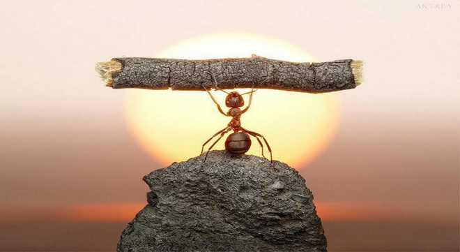 kerja keras dalam pencapaian kesuksesan2