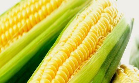 Makanan yang bisa jadi pengganti nasi