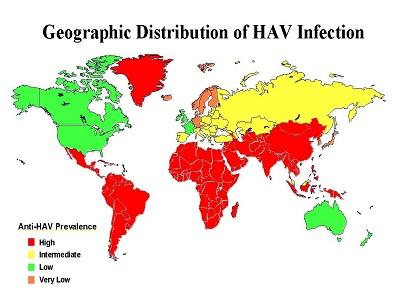 Fakta Penting Seputar Hepatitis Di Indonesia Dan Tips Jaga Kesehatan Hati