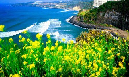 Trik Liburan Ke Korea Selatan Dengan Bebas Visa