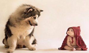 Heboh Kasus Anak Digigit Anjing, Ini Cara Cara Menghindarinya!