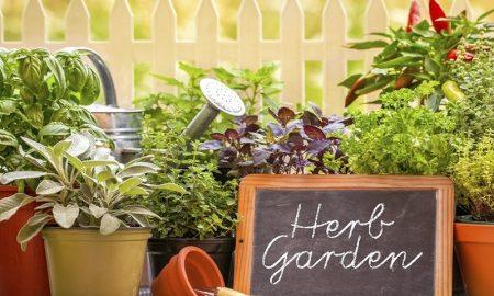 Manfaat Herb Garden Solusi Pintar Dan Sehat Di Dalam Rumah