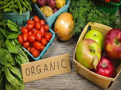 Peluang Usaha Budidaya Sayuran Organik Ala Urban Farming