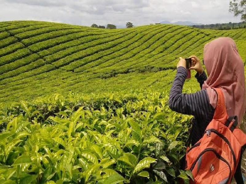 Perkebunan Teh Di Jawa Timur Yang Asik Buat Liburan Weekend Anda