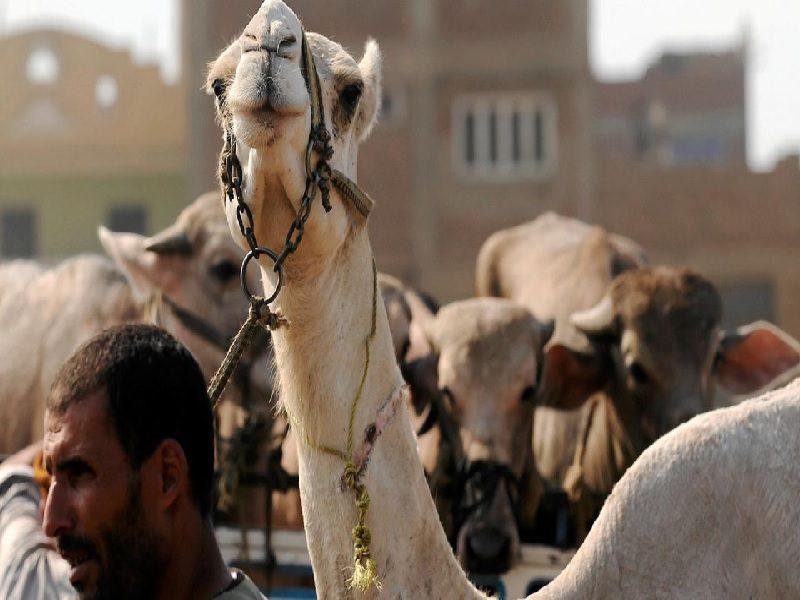 Ragam Perayaan Idul Adha Di Berbagai Penjuru Dunia